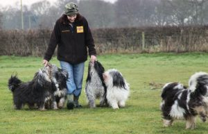 Lesley with (from left to right) Fleur, Jynx, Teka, Tizzy and Riff.
