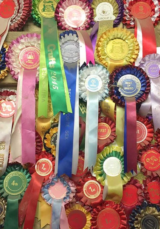 Crufts and other awards